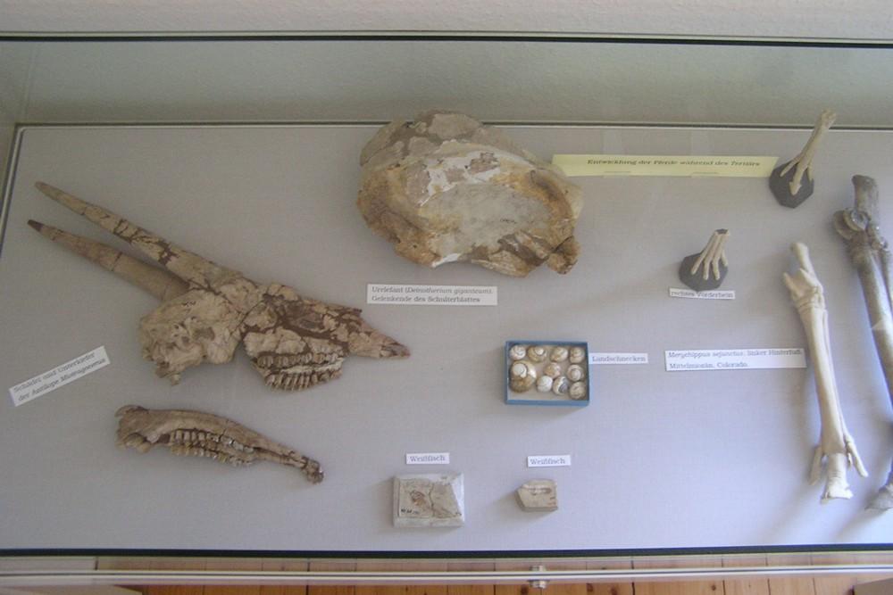 Fossilien heimatmuseum immendingen