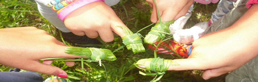 Kräuter, die Apotheke der Natur. Hier Kräuterpflaster